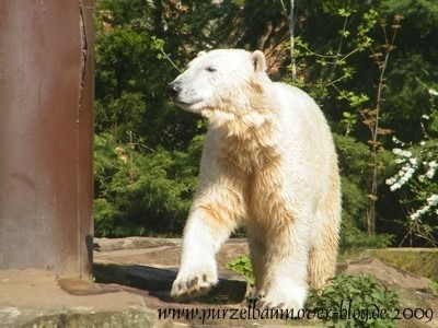 Knut am 11. April 2009