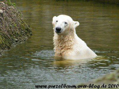 Knut am 21. April 2010