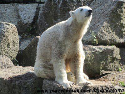 Knut am 24. September 2010