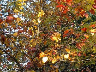 Herbstlicher Oktoberdonnerstag