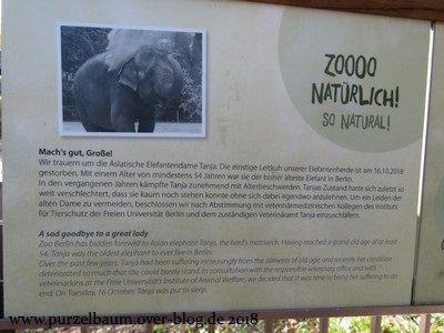 Abschiedsgruß für Tanja an der Elefantenanlage