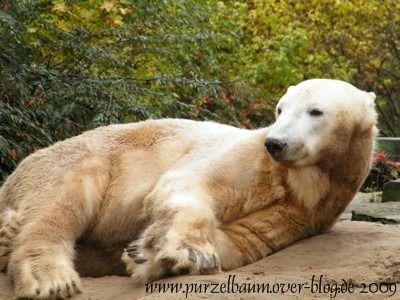 Knut am 28. Oktober 2009