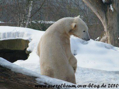 Knut am 18. Februar 2010