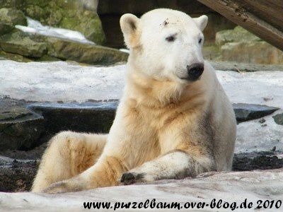 Knut am 27. Februar 2010