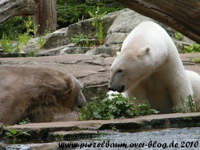 Knut und Gianna am 20. Juni 2010