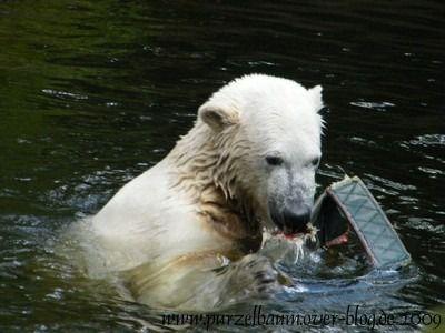 Knut am 25. Juli 2009