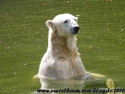 Knut am 18. September 2010