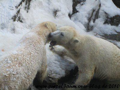 Knut und Tosca am 26. Dezember 2010