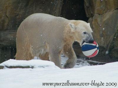 Knut am 21. Februar 2009