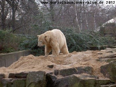 Knut am 29. Februar 2008