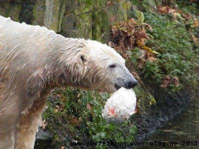 Knut bei einer seiner Lieblingsbeschäftigungen - dem Ballspiel