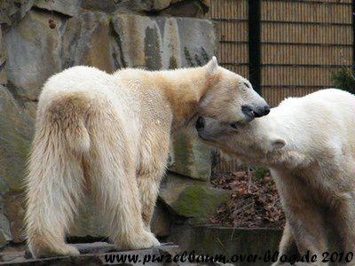 Knut und Gianna am 28. März 2010