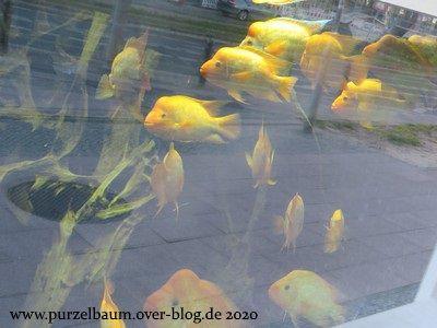 Einige von außen zu besichtigende Bewohner des Aquariums