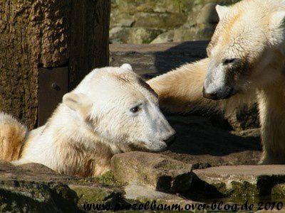 Knut und Gianna am 17. April 2010