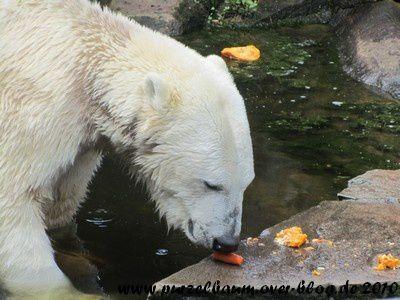 Knut am 18. August 2010
