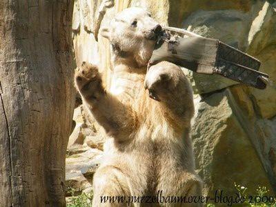 Knut am 23. August 2009