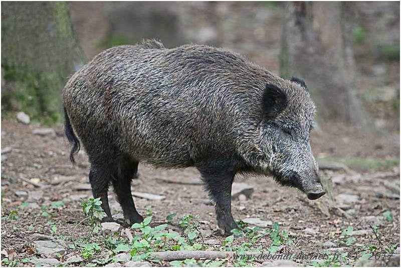Les mammifères victimes de la chasse en France - Le blog de