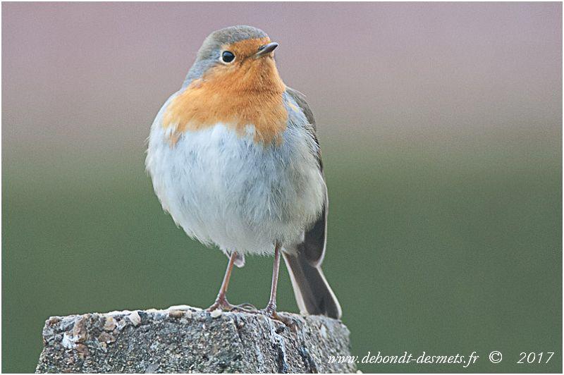 Ne dirait-on pas que cet oiseau monte la garde à l'entrée de son territoire?