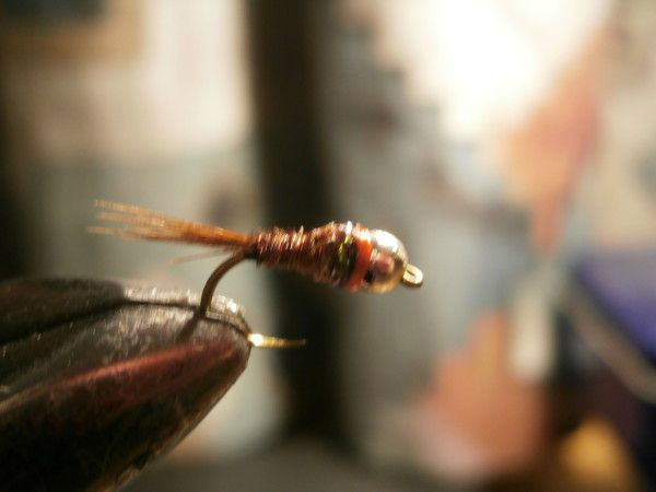 Nuevas ninfas,moscas y perdigones 2019