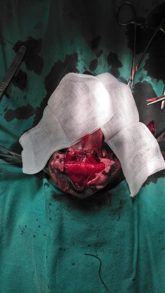 vue per opératoire lors des sutures