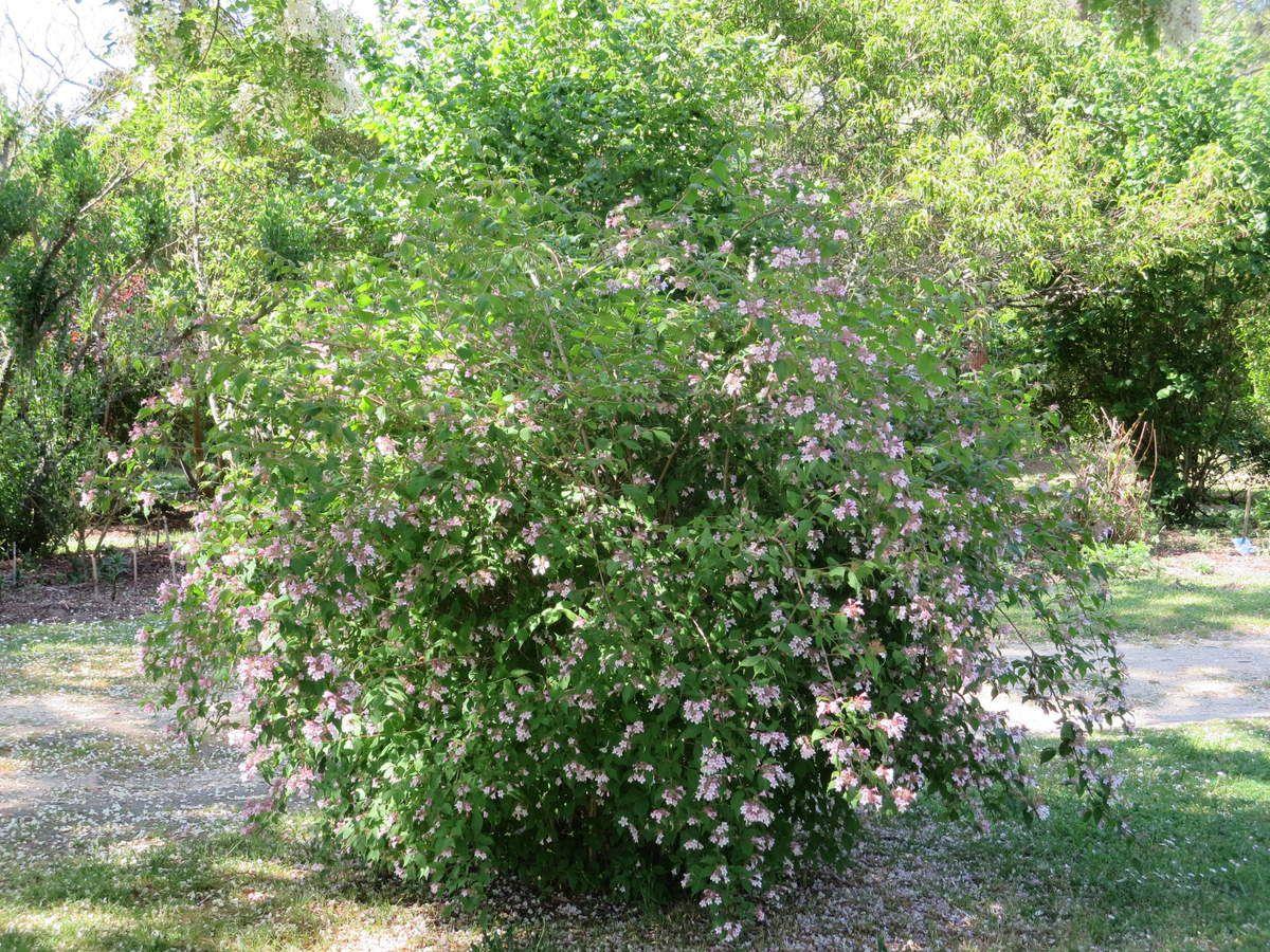 Asseyez-vous quelques instants près du Seringa, juste sous les acacias ...Humez! vous êtes au paradis des senteurs