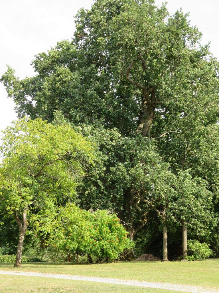 Ce très joli parc, ces grands arbres, ces sentiers de marche, ces bancs....
