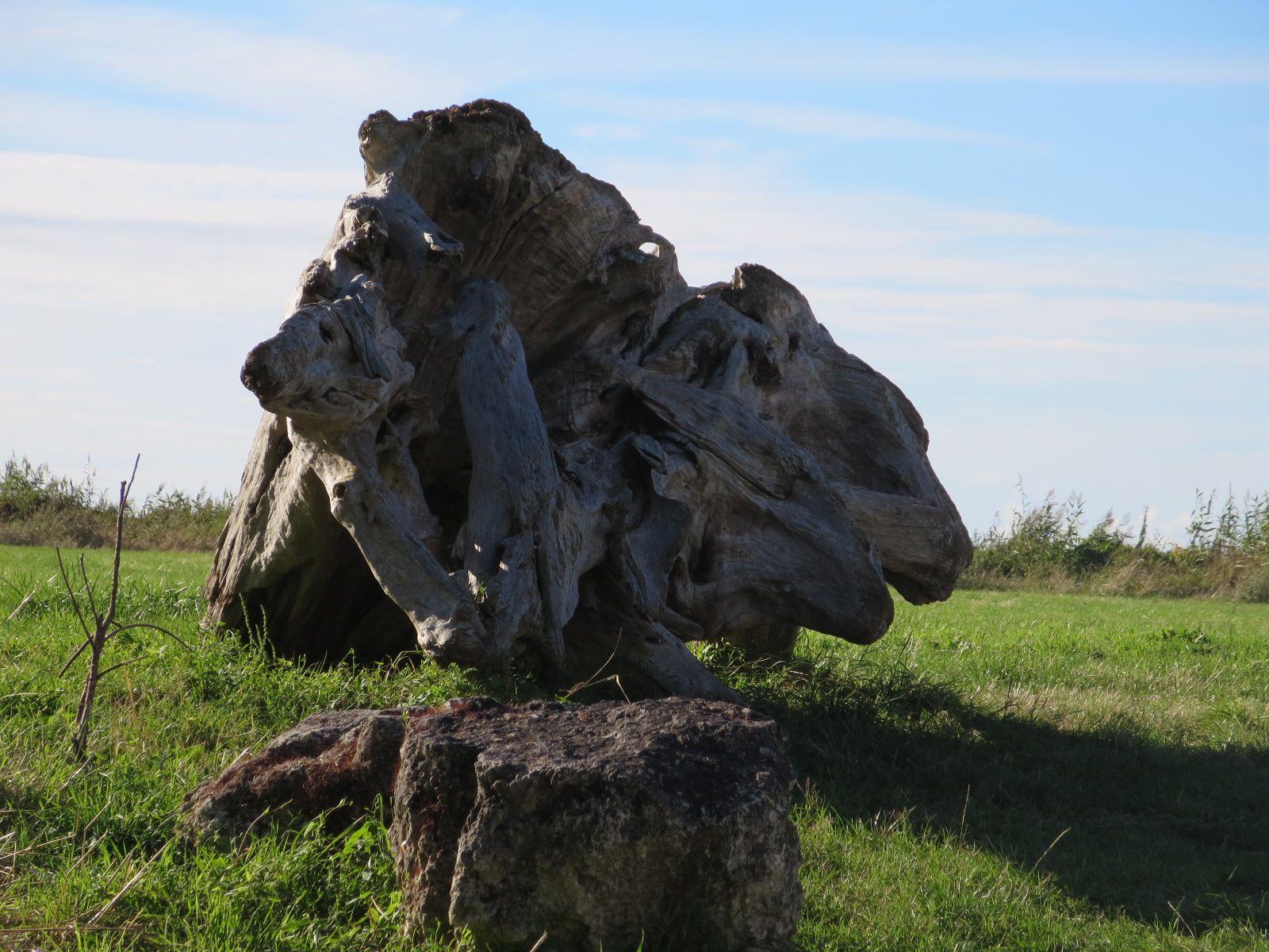 La toute dernière rencontre avec la paréidolie ... (des têtes d'animaux,) et même des licornes souvent