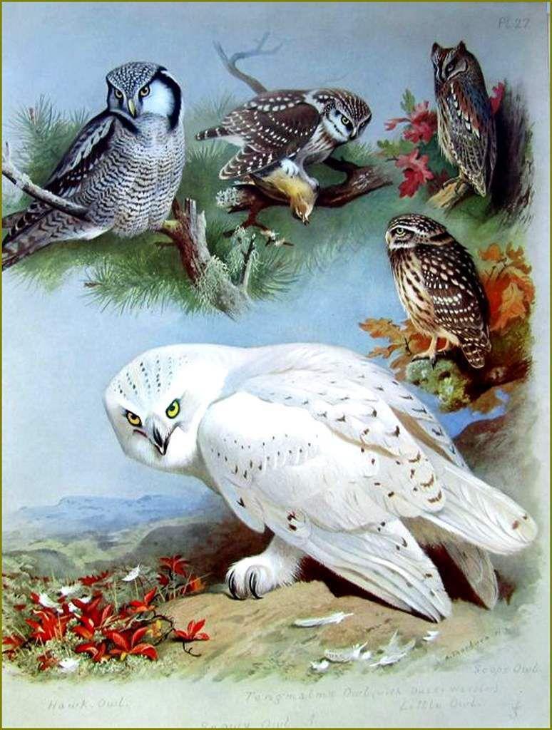 Archibald Thorburn (1820-1899)