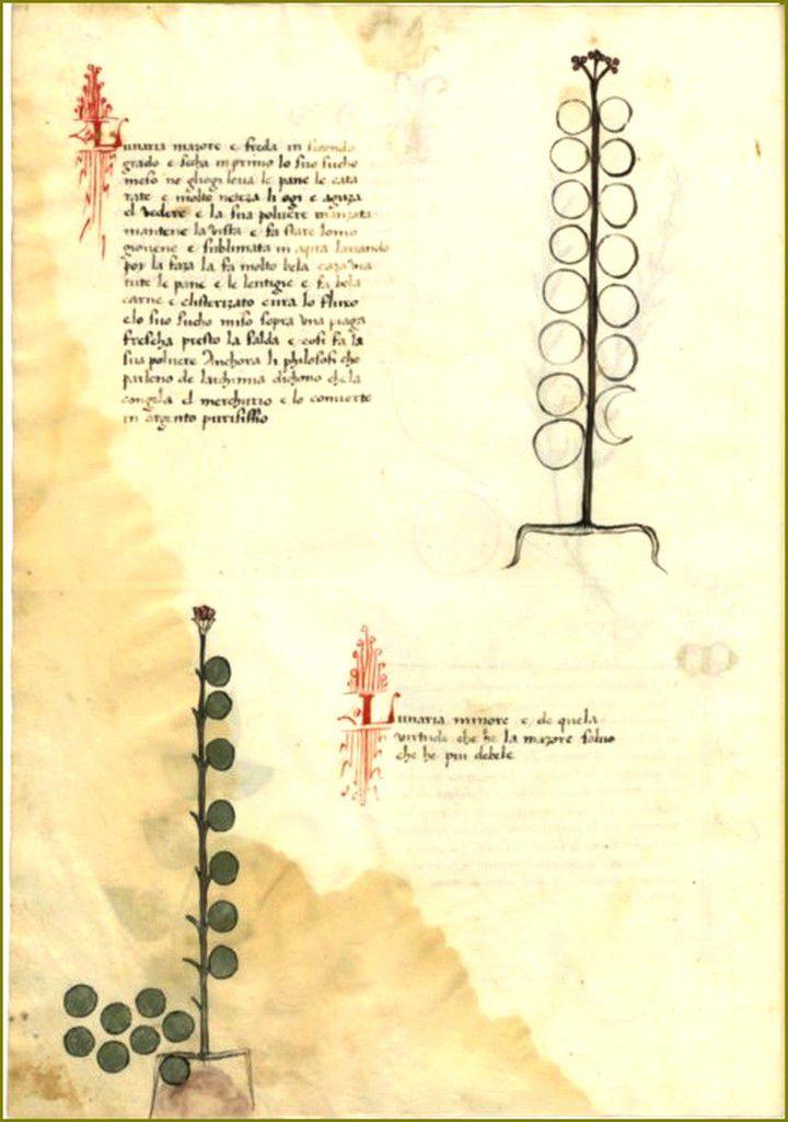 Mythologie des fleurs - Monnaie du Pape (Lunaire)