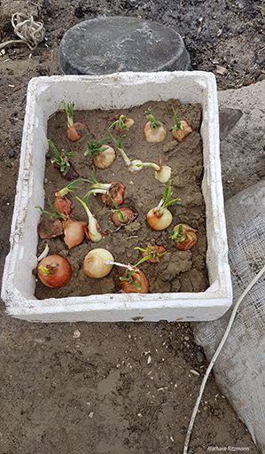 Jardin et cuisine de fortune dans le camp de réfugiés d'Adana