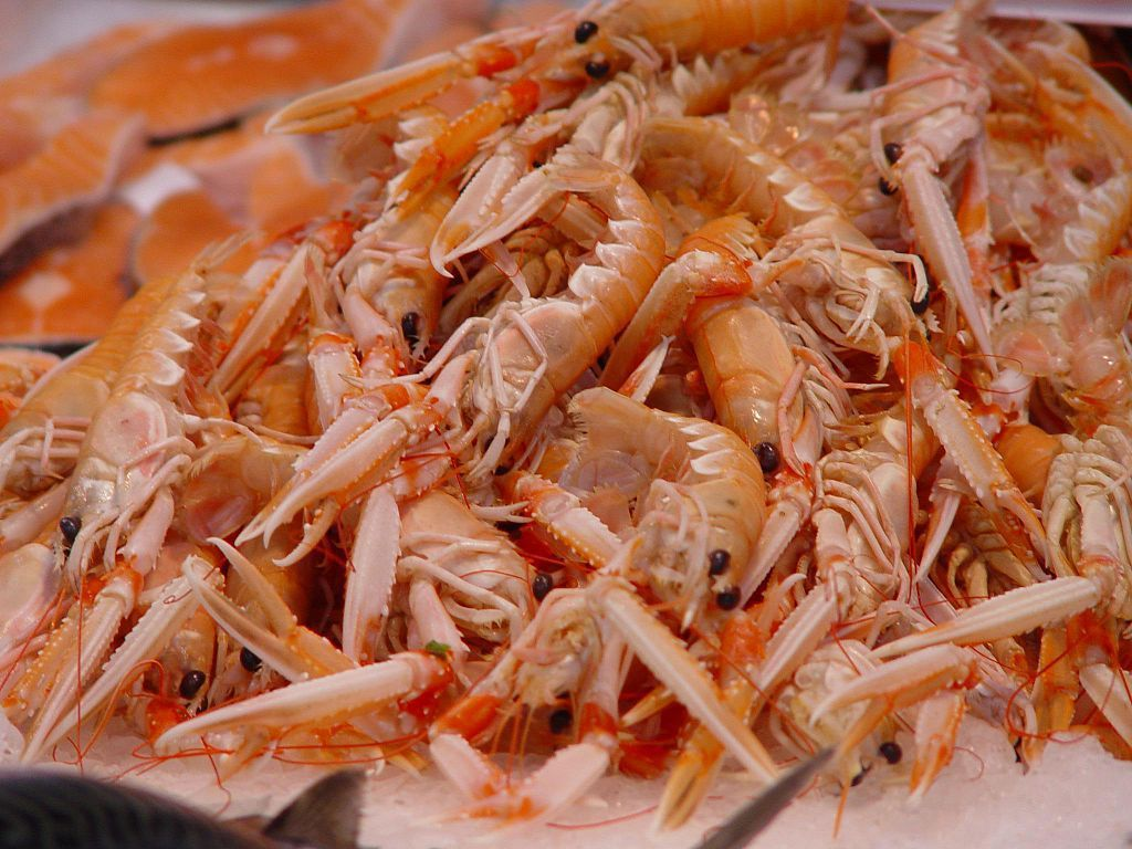 «Shrimps at market in Valencia». Sous licence CC BY-SA 2.0 via Wikimedia Commons - https://commons.wikimedia.org/wiki/File:Shrimps_at_market_in_Valencia.jpg#/media/File:Shrimps_at_market_in_Valencia.jpg