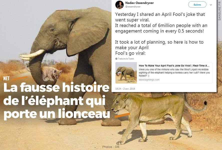 La fausse histoire de l'éléphant qui porte un lionceau #fakenews