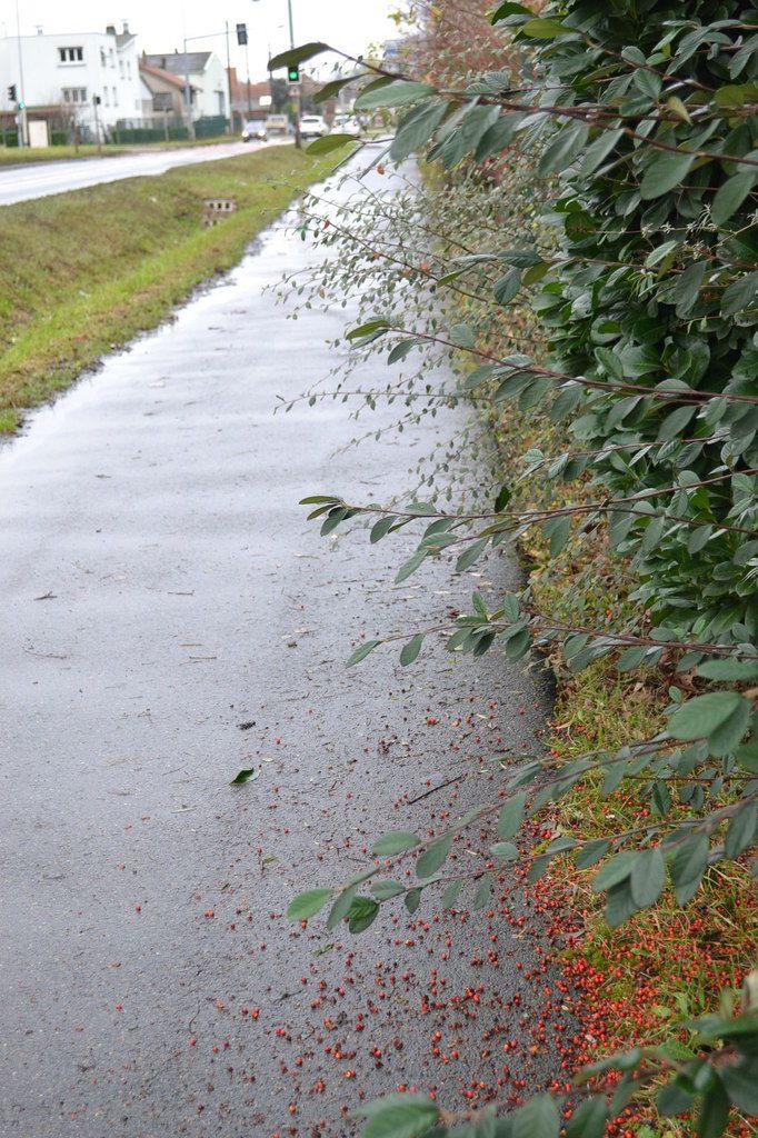 Wissous: simples désagréments: eau qui n'évacue pas, arbustes pas taillés, végétation stagnante.
