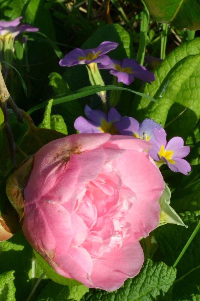 Les fleurs du mois de mars. (2019)