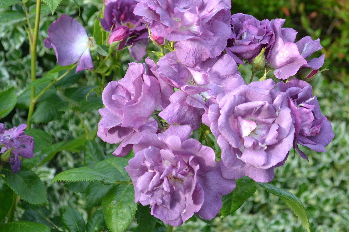 les fleurs de la fin mai.