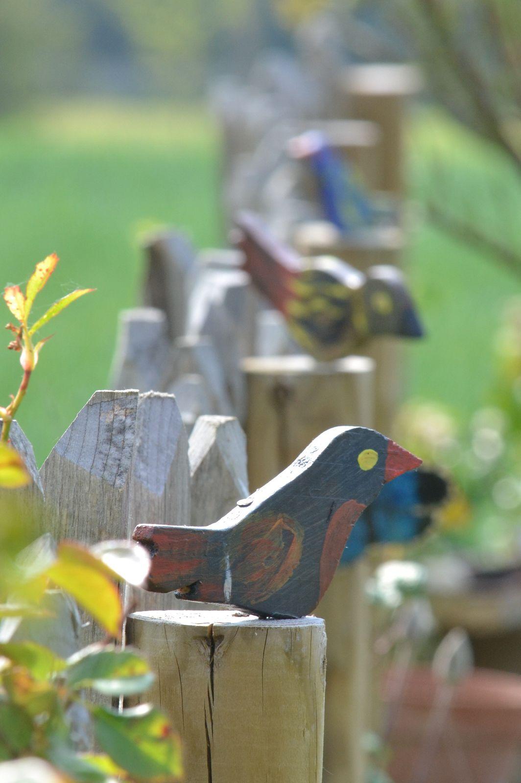 Les oiseaux sur les piquets