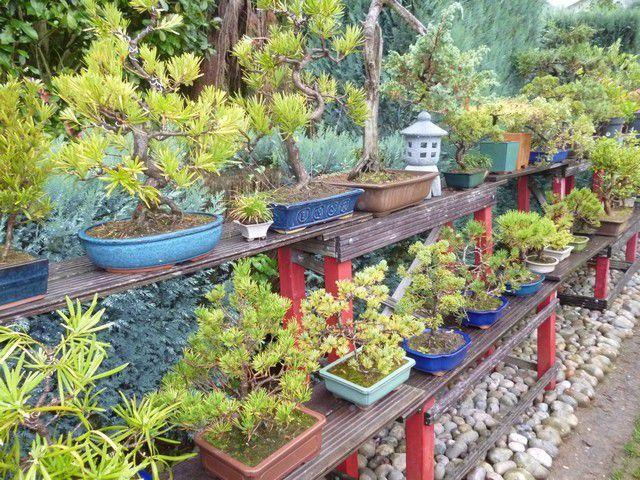 Environ 150 bonsaïs sont rassemblés.