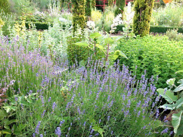 Jardin d'aromatiques.