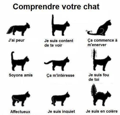 Images pour comprendre votre chat.