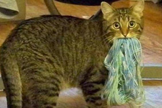 Images de chats amusantes