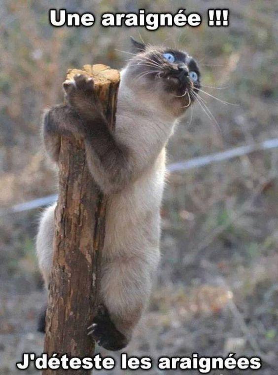 Blagues de chats en images