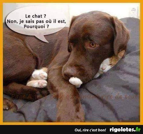 Images drôles et émouvantes de chats