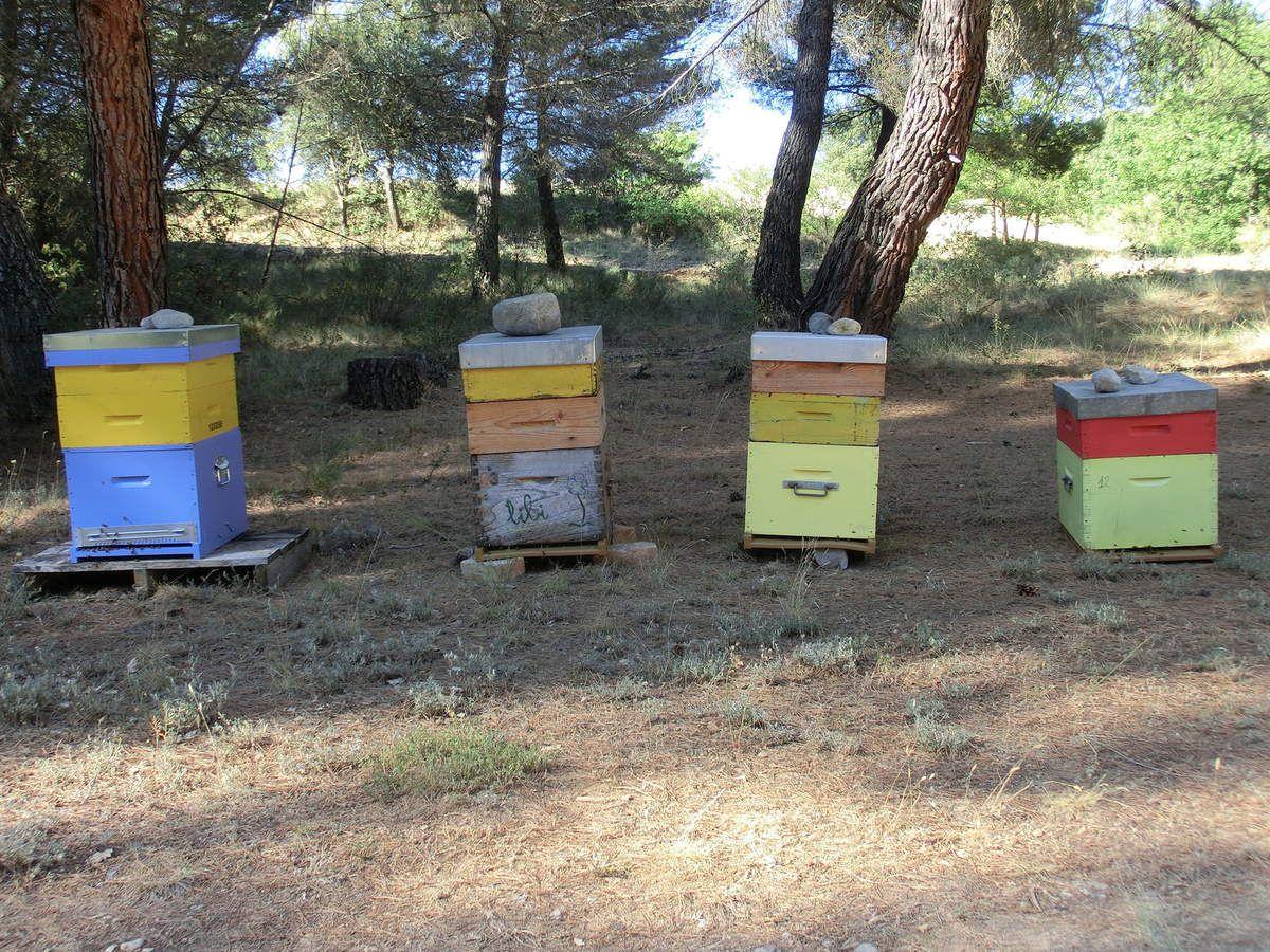 ruches sur le plateau d'Entrevennes