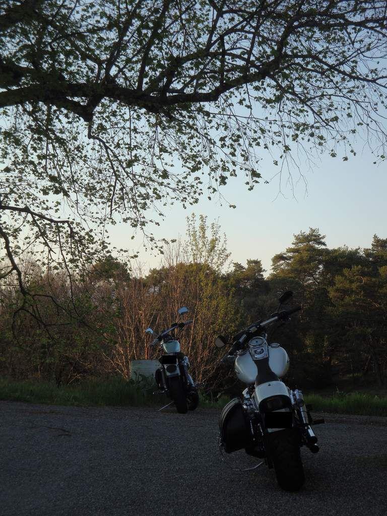 Marché vintage à Solliès-Pont en Harley Davidson