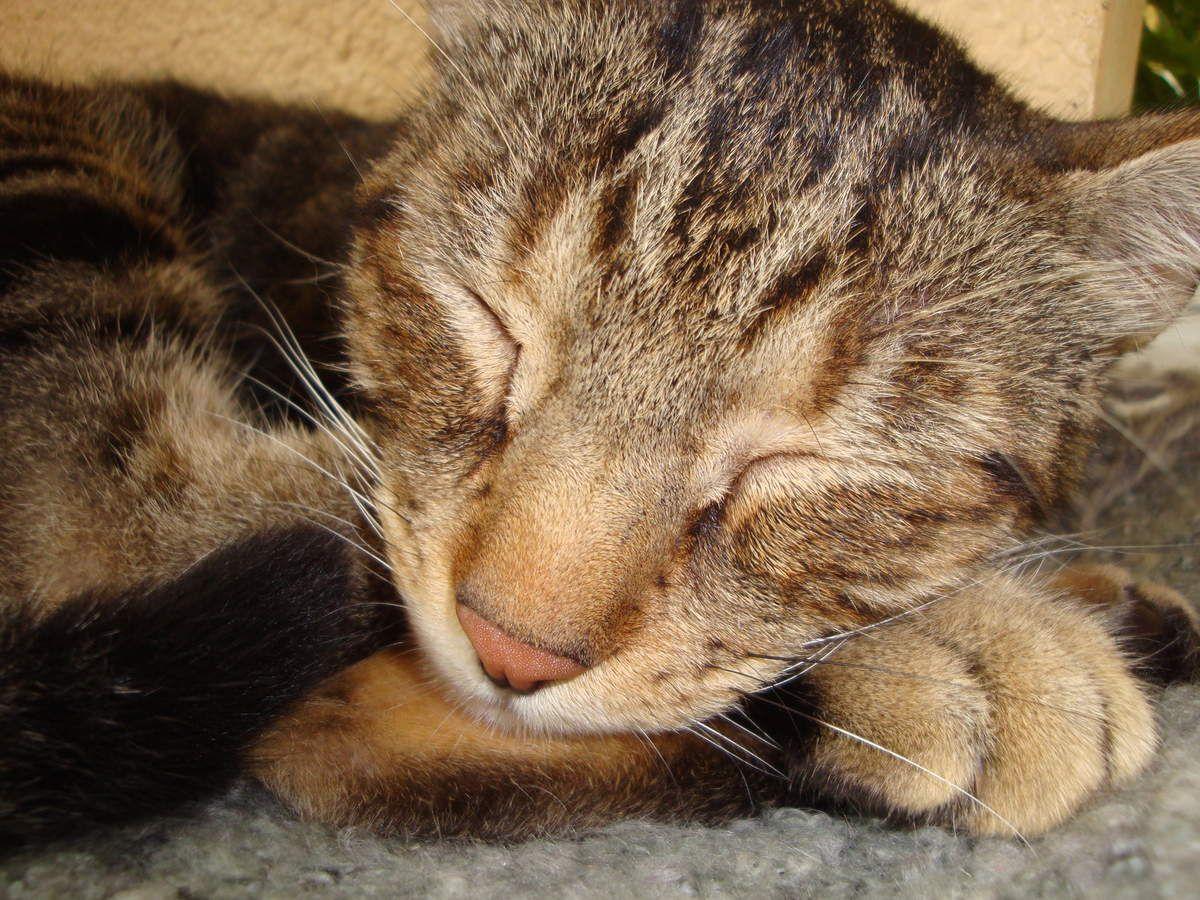 Manouche et Métis, mes chats : 2015