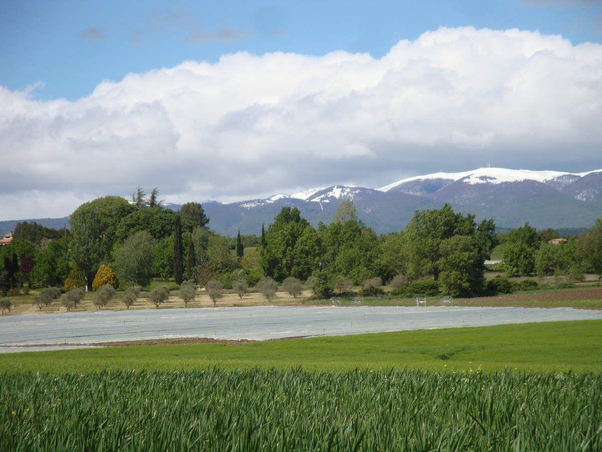 La montagne de Lure, au loin