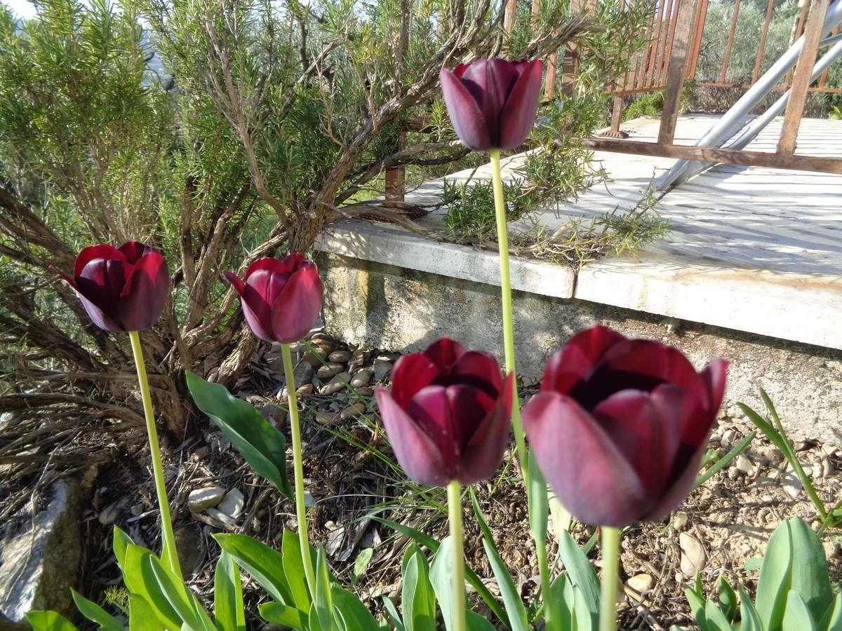Le printemps est enfin là !
