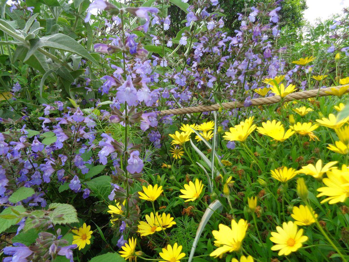 Le jardin du Palais Carnolès à Menton
