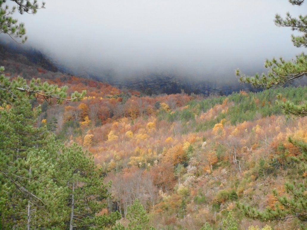 automne à la montagne de Lure
