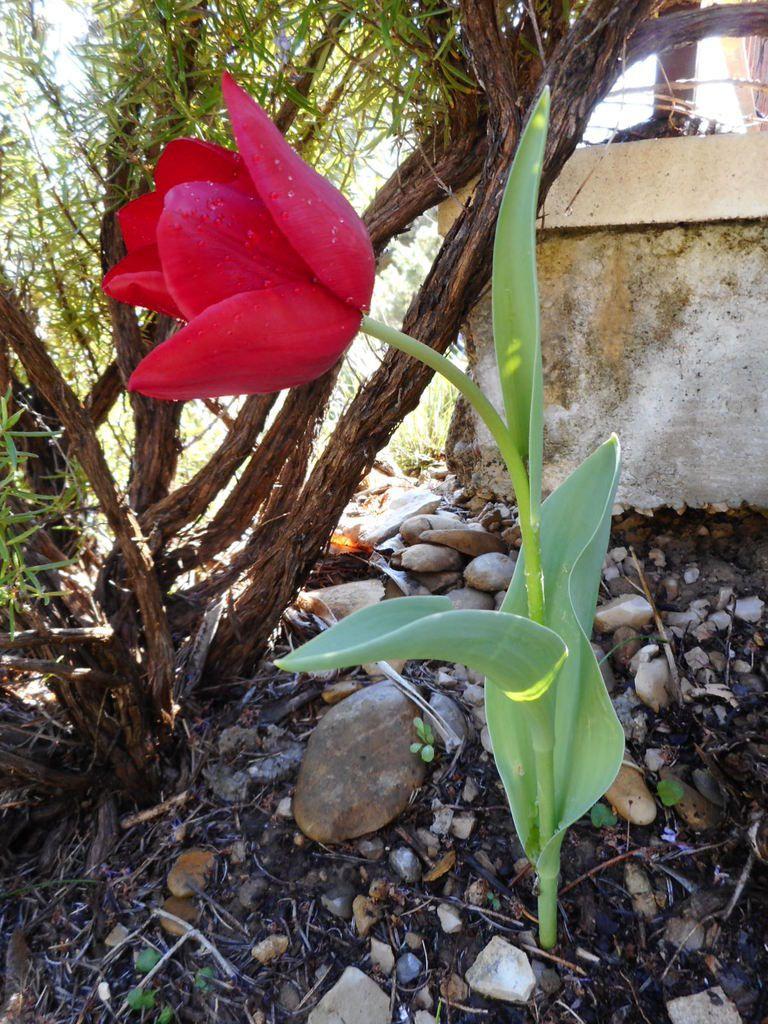 premières fleurs du printemps dans le jardin